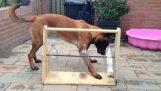 Un jeu amusant pour le chien