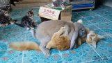 Kanin våldtäktsman vs katt