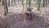 Mouflon piégé accepte l'aide d'un homme