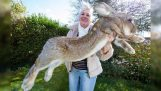 दुनिया में सबसे बड़ा खरगोश