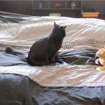 Όταν στρώνεις το κρεβάτι παρέα με τις γάτες σου