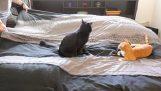 Wanneer strwneis het bed opknoping met uw katten