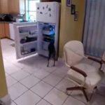 Ο σκύλος στο ψυγείο