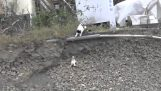 Mommy cat rescues the little
