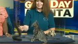 An enthusiastic Kitty in tv Studio