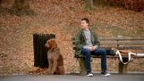 Akıllı köpek;
