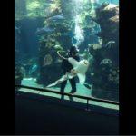 Ο χαδιάρης καρχαρίας