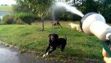Οι σκύλοι και το λάστιχο του νερού