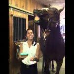 Ένα άλογο σβήνει τα κεράκια
