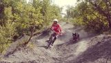 Downhill cycling with a dog