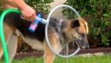 Washing dog Woof Washer 360