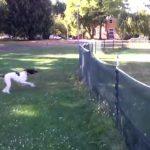 Η άψογη τούμπα του σκύλου