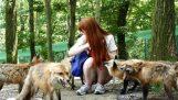Το χωριό των αλεπούδων στην Ιαπωνία