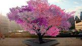 El árbol con la 40 tipos de frutas