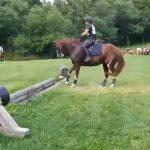 Διστακτικό άλογο πηδά ένα εμπόδιο