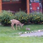 Ένα μικρό ελάφι και ένας λαγός παίζουν μαζί