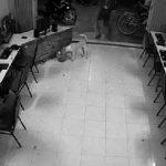 Το κάρμα τιμωρεί νεαρό που ήθελε να κλωτσήσει αδέσποτο σκύλο