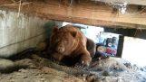 Um urso na minha varanda