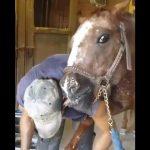Το άλογο λατρεύει τον πεταλωτή