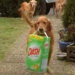 Οι σκύλοι βοηθούν με τα ψώνια