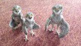 Τρεις κουκουβάγιες τραγουδούν ραπ