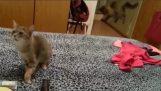 น่ากลัวแมวจาม