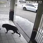Il cane più fortunato del mondo