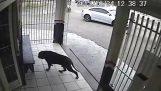 Ο πιο τυχερός σκύλος στον κόσμο