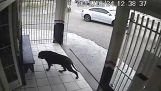 Le chien le plus chanceux du monde