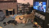 Ο σκύλος βλέπει την αγαπημένη του ταινία