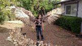 Τα ανθρώπινα φτερά