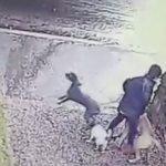 Βόλτα με τρεις σκύλους (Fail)