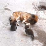 Η μαμά γάτα με τα μικρά της επισκέπτονται έναν παλιό φίλο