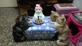在生日聚會上的貓