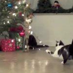 Όταν οι γάτες επιτίθενται στα Χριστουγεννιάτικα δέντρα