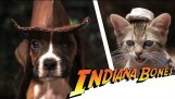 Indiana Bones – Raiders of the Lost Bark