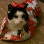 Πως να τυλίξεις μια γάτα για δώρο