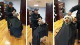 De hond in de Salon
