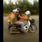 Έβγαλε βόλτα τους σκύλους του
