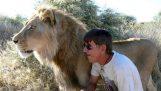 11 χρόνια φίλος με ένα λιοντάρι