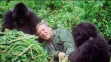 เซอร์เดวิด Attenborough ที่ 90: รถพ่วง – บีบีซี