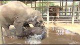 Слоненок, купание в ванне