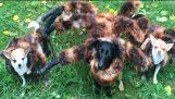 MUTANT GIANT SPIDER DOG IS BACK HALLOWEEN PRANK