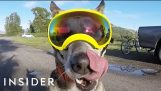 Goggles Made For Adventurous Dogs