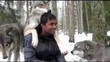 अद्भुत भेड़ियों के एक जंगली पैक के साथ बैठक !!