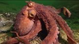 Octopus Steals Crab From Fisherman – Super Smart Animals – BBC Earth