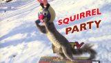 गिलहरी पार्टी