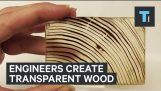 Engineers create transparent wood