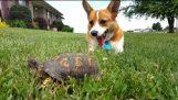 Турбо и костенурка