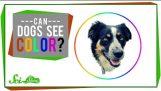 Vidite li psi boje?